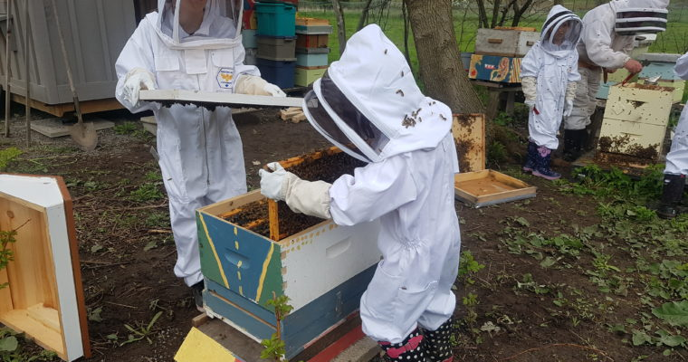 May – The Importance of Bees and Adding Bees to our Hive