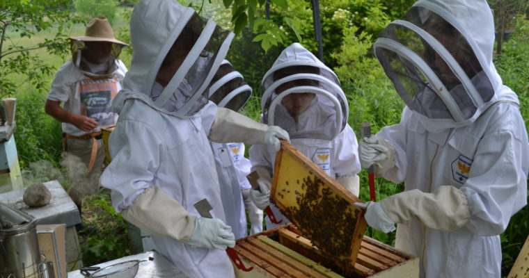 June – Bee Biology and Communication; Hive Inspection